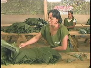 leaf workers