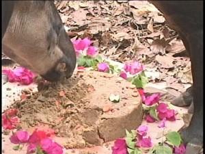 april tapir 2