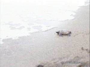 Turtle0012